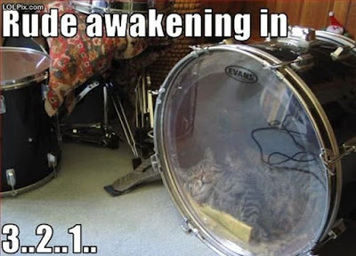 photo of a cat sleeping in a drum
