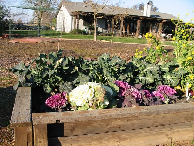 The Farmer Fred® Rant: Tips For Starting Your First ...
