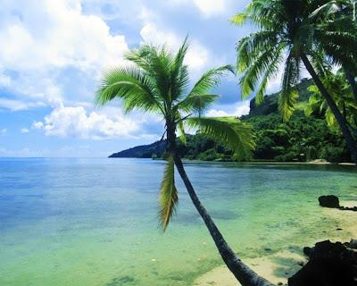 playa-con-palmeras-y-el-mar-en-calma