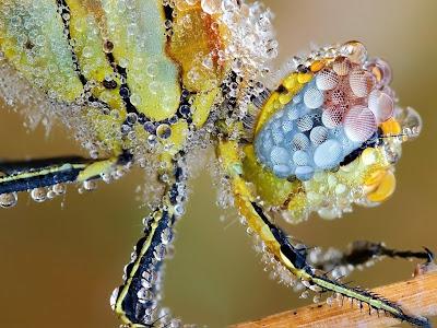 insecto-escarchado