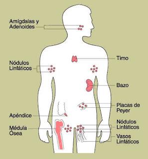 imagenes para dibujar del sistema inmunologico