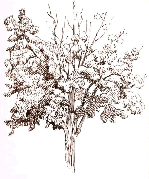 Orange explains it all: tree sketches