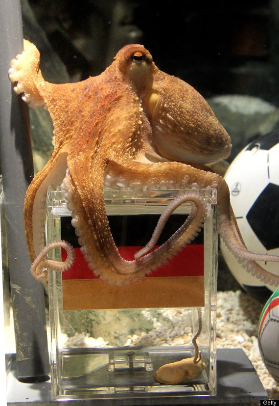 Paul The Octopus predicts the Germany as World Cup Winner