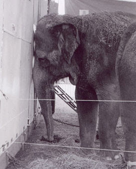 Stop Animal Abuse: Not Everyone Is Happy At The Circus!