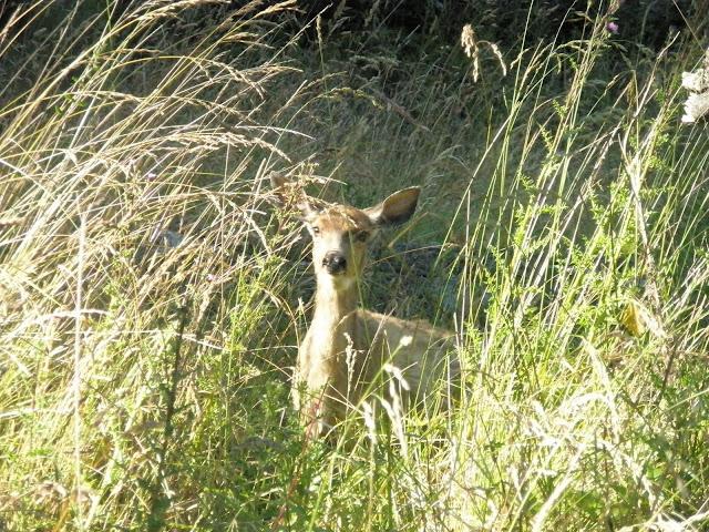 Deer at Jones Island State Park