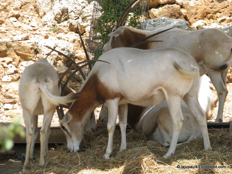 Unicorns In The Bible: THROUGH THE LAND OF ISRAEL III: Bible Land Preserve
