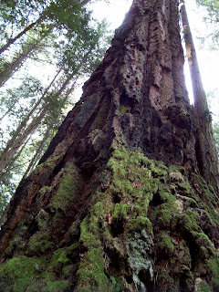 Vancouver Island Big Trees Francis King Regional Park