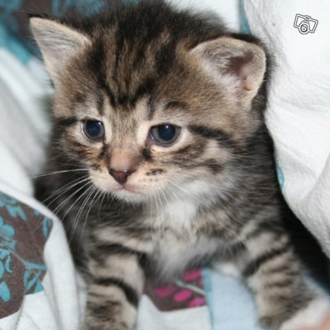 kattungar blocket göteborg