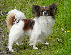 Wahyu Pets Jenis Anjing 45 55