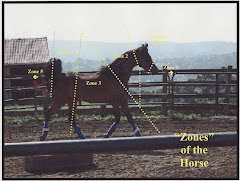 """Zones"" of the Horse"