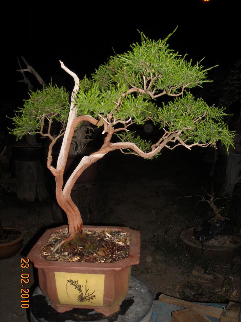 Mat Yie Garden Cucur Atap