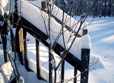 Snow January 2010 #5