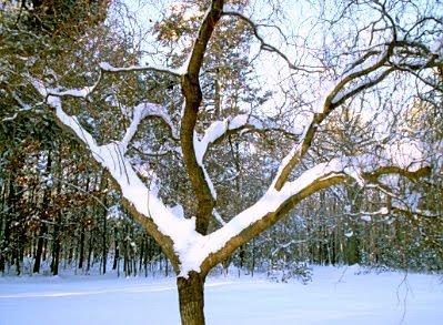 Snow January 2010 #8