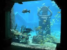 Adventuresome 50 Atlantis Resort Paradise