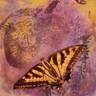 swallowtail butterfly, for sale on wildlife page
