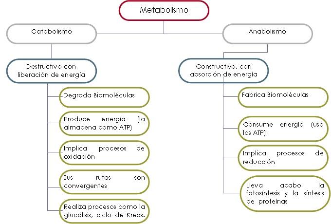 La Guía de Justin Bieber para Metabolismo y nutricion