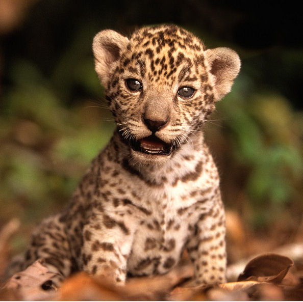 Ovticartmy: World's Most Exotic Pets