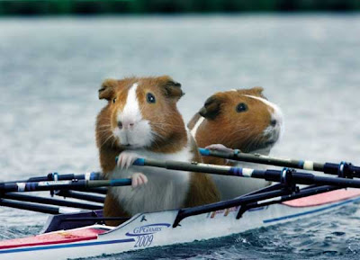 [Image: Animal_Olympics_05.jpg]