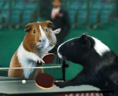 [Image: Animal_Olympics_04.jpg]