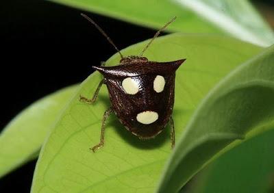 face-bug-2 Bug report - Parte 1