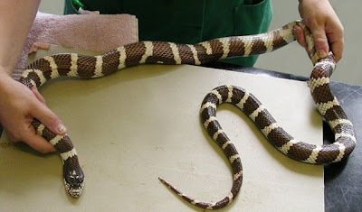 The Most Stupid Snake in the World ~ Damn Cool Pictures