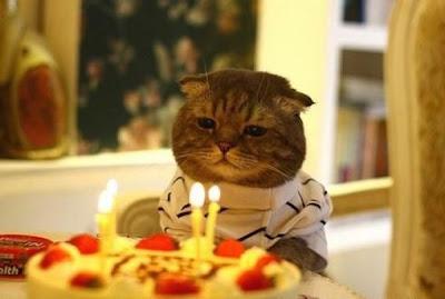 احتفال القطط بعيد ميلادهم