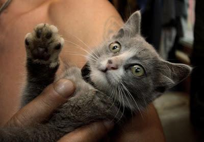 قطة باربع اذان