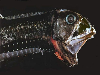 The Ugliest and Scariest Fish Seen On www.coolpicturegallery.us