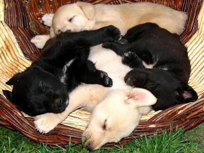 Quantos filhotes uma cadela pode ter?