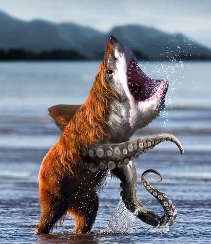 bear_squid_shark.jpg