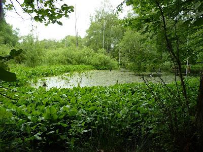 Unberührte Natur im Duvenstedter Brook - Seerosenteich