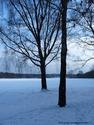verschneite Stadtparkwiese mit Bäumen bei blauem Licht
