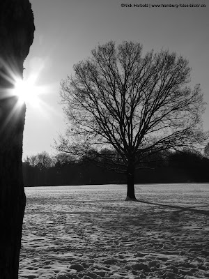 Winter Stadtpark Hamburg in scharz weiss. Sonne und Baum