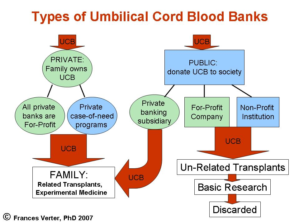 10 Berita Terbaru The Basic Of Cord Blood Banking