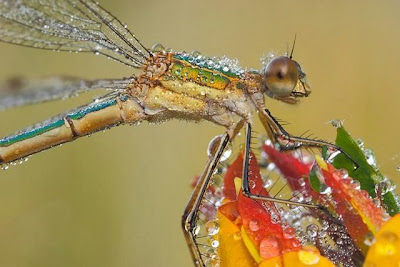 Macro Photography (Beautiful Batterfly)