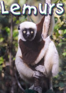 lemurs-of-magadascar-namoroka-national-park