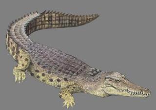 cocodrilo marino Crocodylus porosus