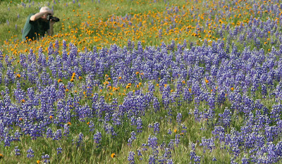 HILLS ARE ALIVE WITH WILDFLOWERS