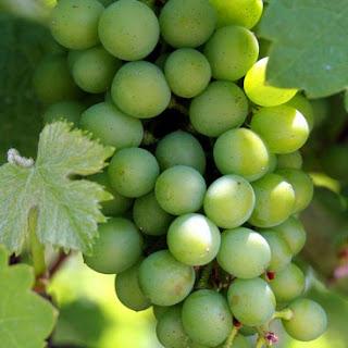 Manfaat Buah Anggur Untuk Mencegah Kanker Payudara