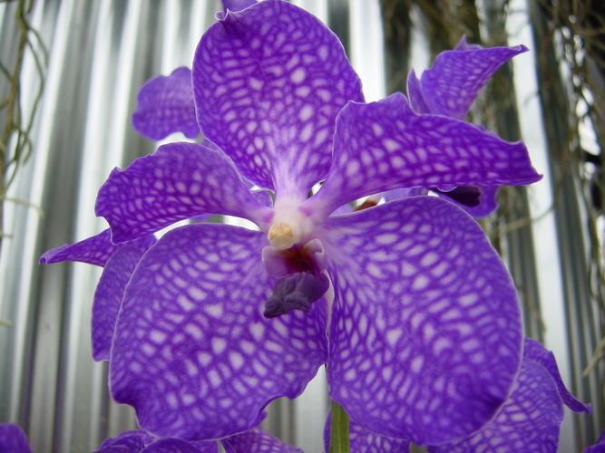 Lagu Ungu Yang Baru Stafa Band Free Download Mp3 Site Streaming Video Online Maharani Gambar Bunga Bunga Cantik