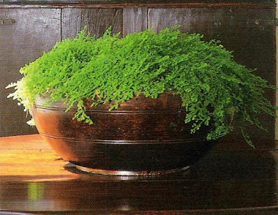Irish moss in wood bowl, image via The Private House by Rose Tarlow as seen on linen & lavender