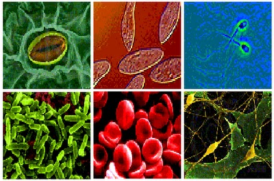 Etologia biologia