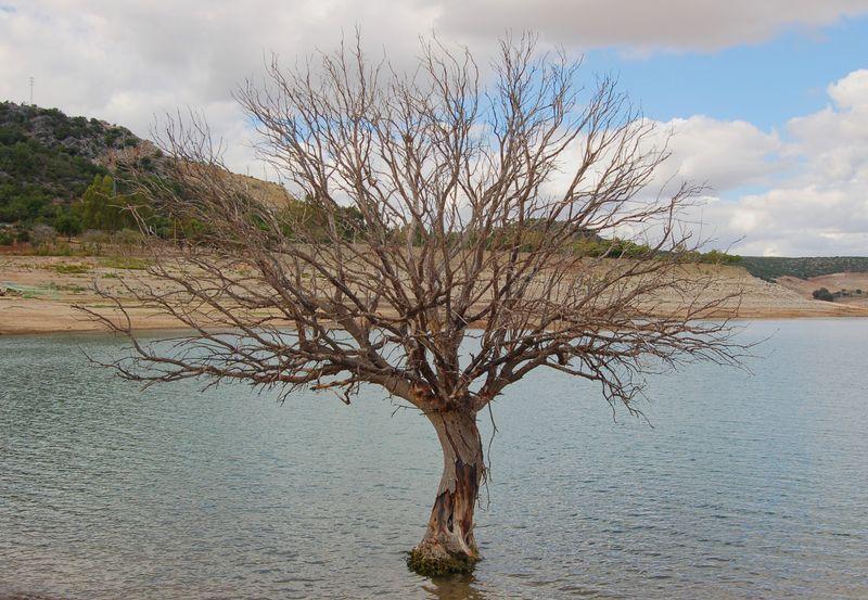 Lojeda nunca cortes un rbol en invierno for Arboles que no se le caen las hojas en invierno