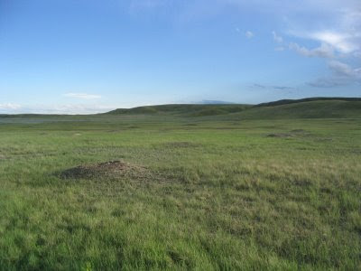 Trevor Herriot's Grass Notes: Bison and birds