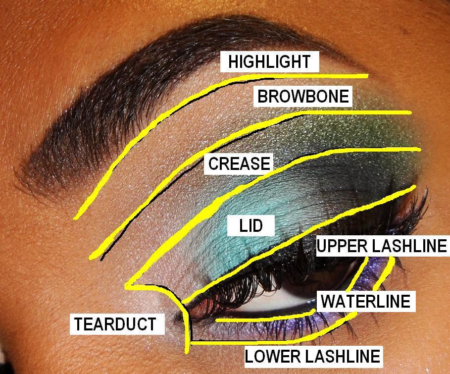 eye shadow placement diagram