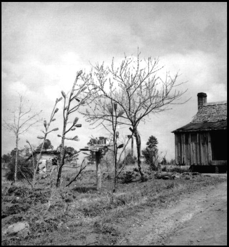 Tales From The Bayou : The Legend Of The Bottle Tree