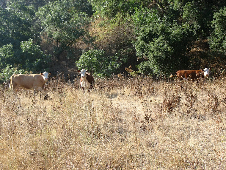 Residents of Soquel Canyon