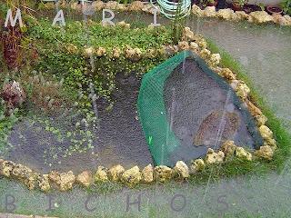 Plantas acuaticas estanques de jard n for Estanques prefabricados grandes