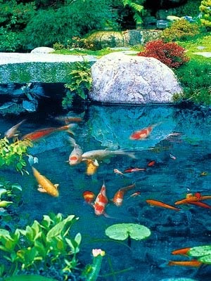 Plantas acuaticas peces para estanques y fauna acu tica for Imagenes de estanques para ninos