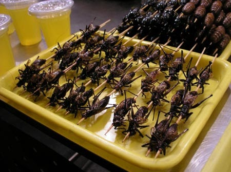 Amazing Things In World Eating Insects For Food Snacking